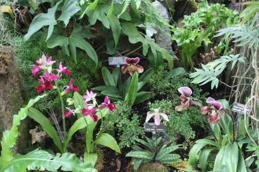 I also loved seeing the huge variety of orchids on display.