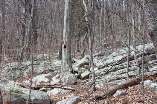 Woody Woodpecker was in the woods on Sunday too.