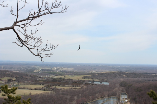 View with buzzard.