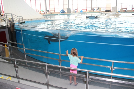 Even dolphins! After our visit Olive declared that her new career path is marine biology.
