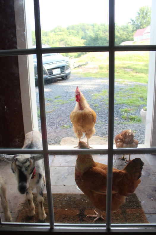 Waiting for us at the door when we woke on Saturday :)