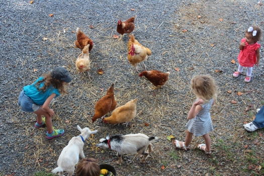 The girls took every opportunity to be with the animals.