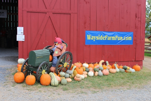Cor...check out his pumpkins!