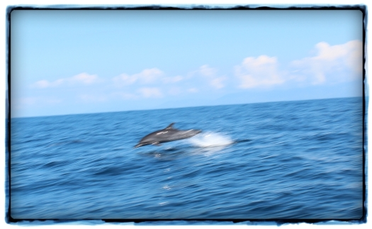 Highlight of the whole day - seeing dolphins galore. Amazing!